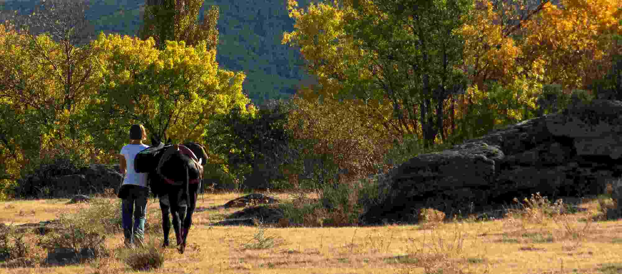 Tranquil walk with a donkey in Segovia, Spain